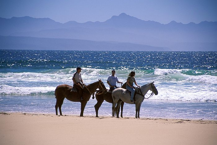 Garden Route Plettenberg Kurland Horses on beach